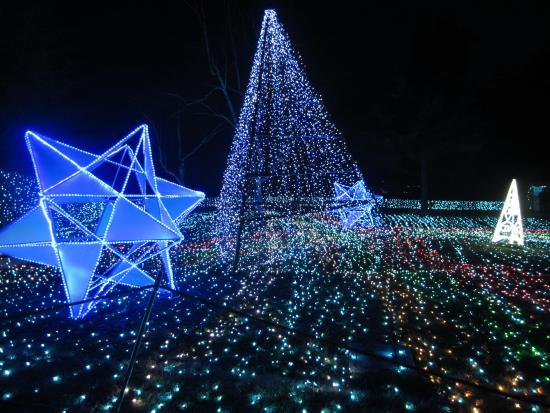 Sagami Lake Resort Pleasure Forest: シンボルツリー