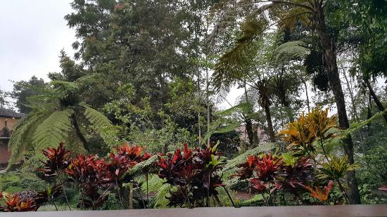 Kaliandra Eco Resort & Farm : View from my cottage