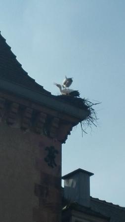 Restaurant A L'Agneau D'Or : Les cigognes sur les toits de Munster