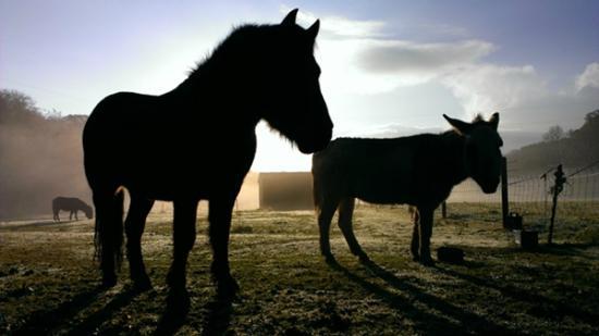 Knowle Farm: Our Dartmoor pony and donkey