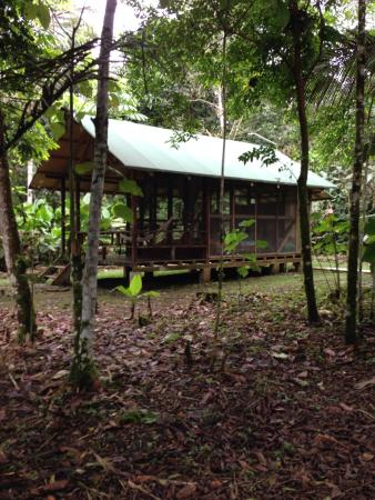Huaorani Ecolodge: Our room no 5
