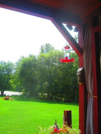 On Cranberry Pond Bed and Breakfast: Amazing Hummingbirds on Porch