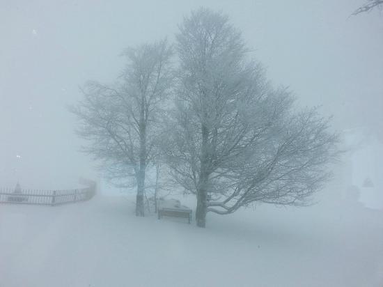 Hotel Die Halde: Winter Wonderland - Blick aus dem Frühstücksraum