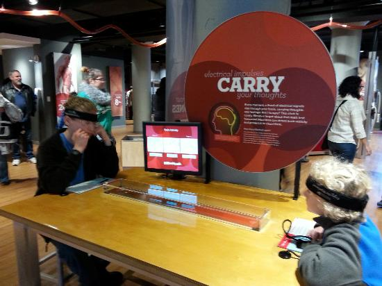 Museum Of Discovery: Brain wave competition!