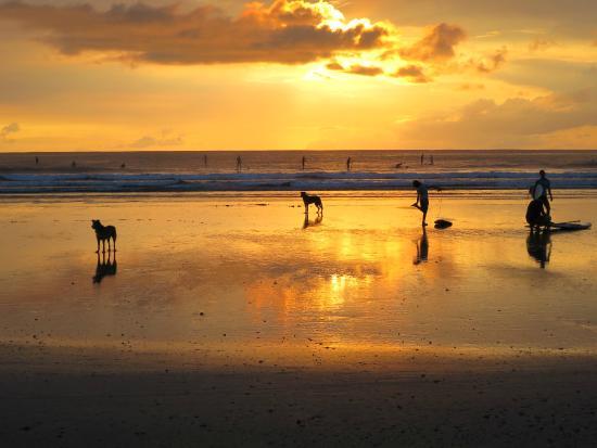 Stranda 2 minutter fra Nosara Beach Hostel