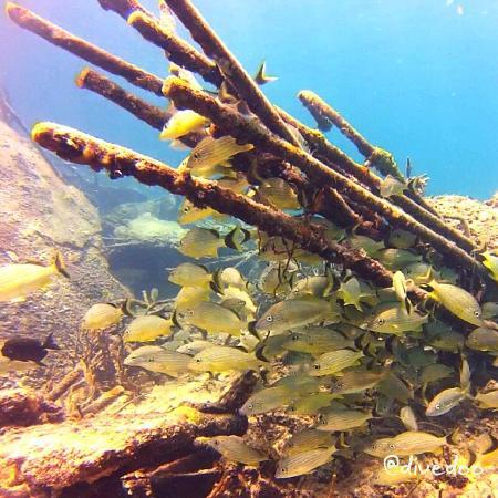 Bimini Undersea : Mergulho no naufrágio Sapona
