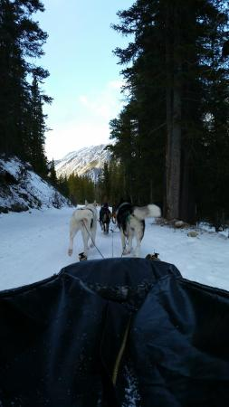 Snowy Owl Sled Dog Tours: Mush!