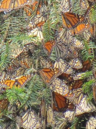 Piedra Herrada Sanctuary: Butterflies