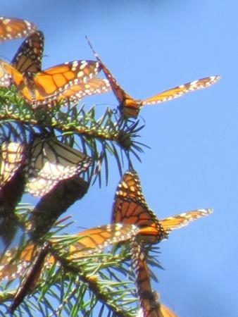 Piedra Herrada Sanctuary: Butterflies Up Close