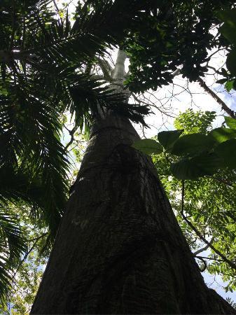Nosara B&B Retreat : Tree by Outdoor Dining
