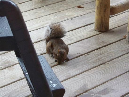 Ash Ridge Cabins: Breakfast time visitor