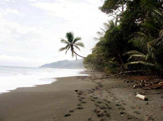 Isolated black sand beach in carate costa rica picture for Black sand beaches costa rica