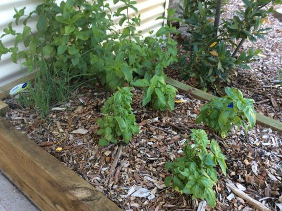 Mount Beauty Holiday Centre : Kitchen herb garden!