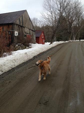 The Pond House Bed and Breakfast: Huck headed back to base camp with his stick