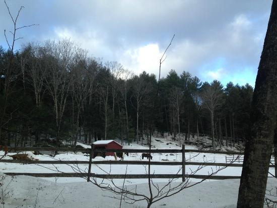 The Pond House Bed and Breakfast: the horse farm up the road
