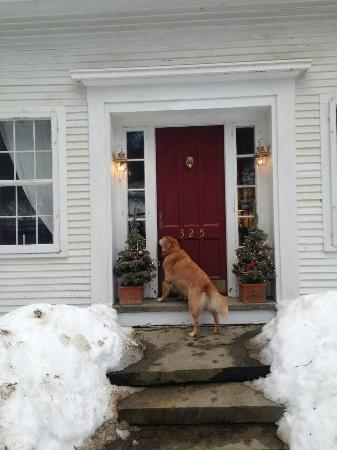 The Pond House Bed and Breakfast : Huck at the front door. Let me in!