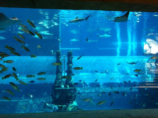 water slide through shark tank a must picture of atlantis the