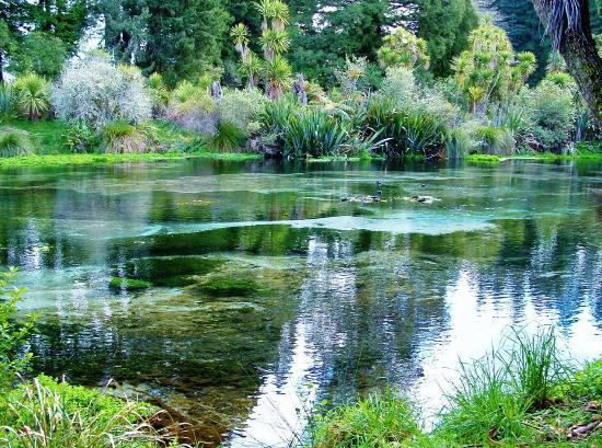 Hamurana Springs Nature Reserve: Downstream.