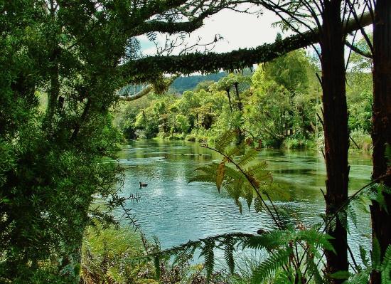 Hamurana Springs Nature Reserve: Upstream.