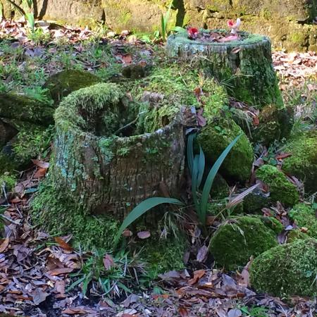 Bulow Plantation Ruins Historic State Park: Just a mossy stump I found beauty in