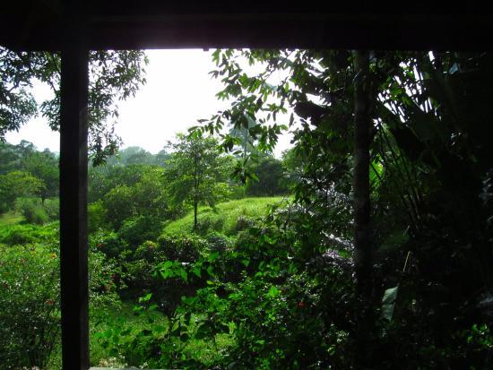 Sepilok Forest Edge Resort: View from room