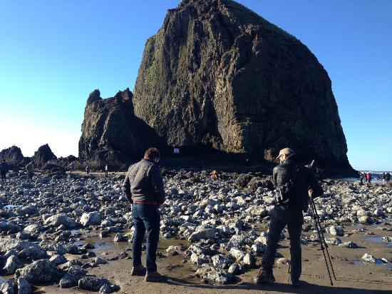 Volcano Lands Private Tours Cannon Beach Tide Pools