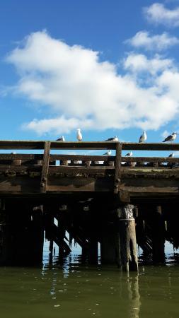 Ride The Ducks of San Francisco : The Birds