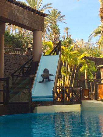 Все хотят кушать - Picture of Oasis Park Fuerteventura, Fuerteventura - TripA...