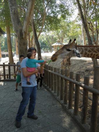 Zoo Chiang Rai - Picture of Chiang Mai Zoo, Chiang Mai - TripAdvisor