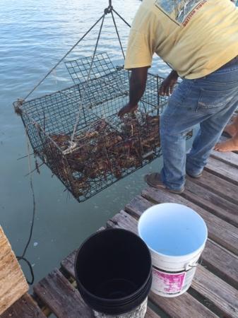 Neptune's Treasure : fresh lobster