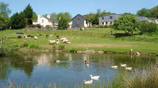 Knowle Farm