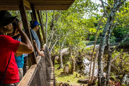 Everglades Country Hotel Reviews