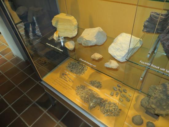 Natural History Museum (Natuurhistorisch Museum): veel fosielen zijn er te zien