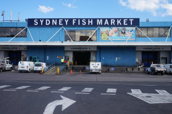 Sydney fish market picture of sydney fish market sydney for Fish market philadelphia