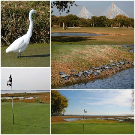 Patriots Point Links on Charleston Harbor : Patriots Point Golf course
