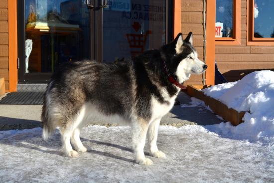 Aventures Nord-Bec: Retired Dog