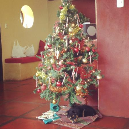 The Green House Peru: Christmas tree
