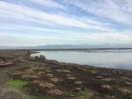Palo Alto Baylands Nature Preserve: Baylands