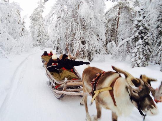 Fell Trek Rauhala: Gita renne