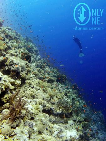 Only One Apnea Center : Freediving excursion :)