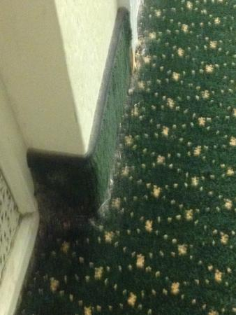 Hawthorn Suites by Wyndham Akron/ Fairlawn: Dust bunnies on sides of room