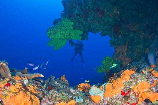 Fort Bay, Saba: Diving at Shark Shoal