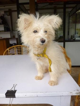 Palolem Green Inn : The cute puppy