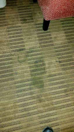 Extended Stay America - Fort Lauderdale - Davie : carpet