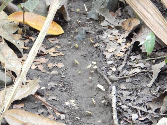 Metropolitan National Park: Ants!