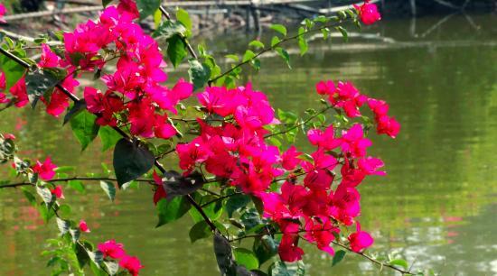Silvassa, India: Island Garden7