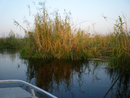 Okavango River: AL TRAMONTO
