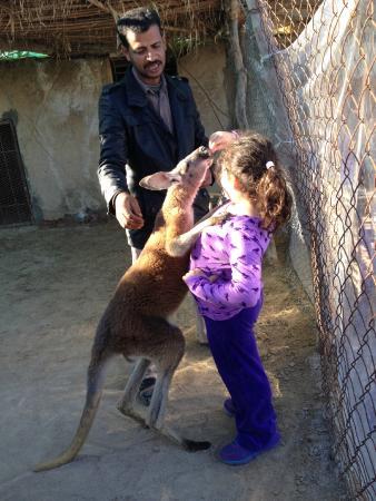 Africa Safari Park & Motel: Kangaroo