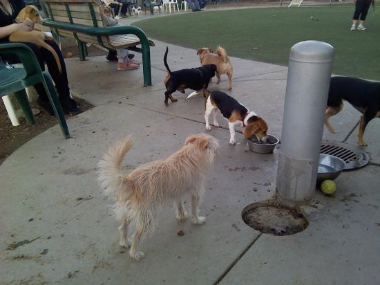 Butcher Dog Park