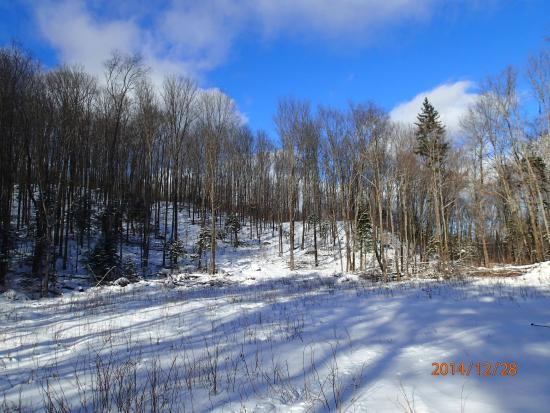 Algonquin Cottage Outpost and the Algonquin Log Cabin: Cross-Country Ski day